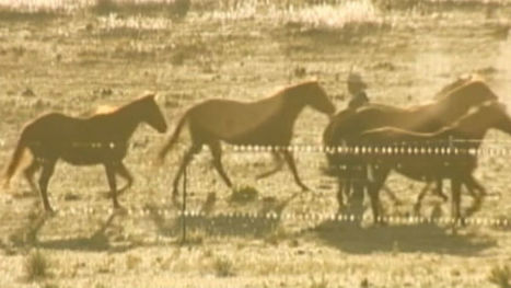 Vietnam vet trains horses to help soldiers with PTSD - 14 News WFIE Evansville | Horse and Rider Awareness | Scoop.it