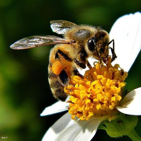 Pollination: A Love Story That Feeds The Earth | Biodiversity IS Life  – #Conservation #Ecosystems #Wildlife #Rivers #Forests #Environment | Scoop.it
