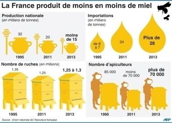 Le miel français a du plomb dans l'aile - Le Dauphiné Libéré   Abeilles, intoxications et informations   Scoop.it