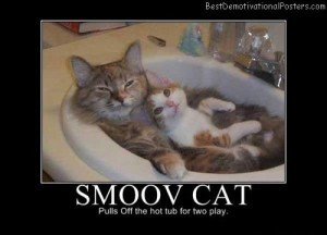 Smoov Cat | Demotivational Posters | Scoop.it
