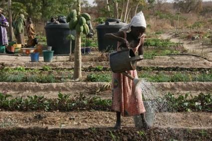 Quelles stratégies pour réduire les gaspillages en eau | Economie Responsable et Consommation Collaborative | Scoop.it