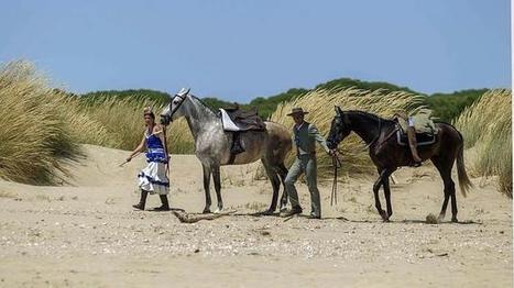 Más de 8.000 personas y 800 caballos pasarán por Cádiz en su peregrinación al Rocío | Caballo, Caballos | Scoop.it