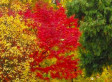Fall Foliage Apps For Leaf Peepers | The Miracle of Fall | Scoop.it
