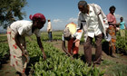 Indian agribusiness sets sights on land in east Africa | Food issues | Scoop.it