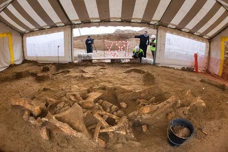 Un squelette de mammouth découvert près de Paris | Merveilles - Marvels | Scoop.it