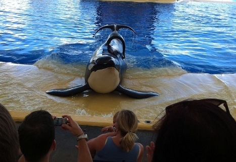 Take Action: Orcas and Dolphins Do Not Belong in Captivity! | SaveJapanDolphins.org | Green Art Cafe | Scoop.it