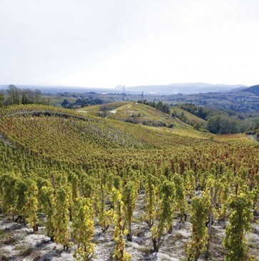The New World of the northern Rhône | Vitabella Wine Daily Gossip | Scoop.it