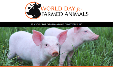 Celebrating World Day For Farmed Animals | Nature Animals humankind | Scoop.it