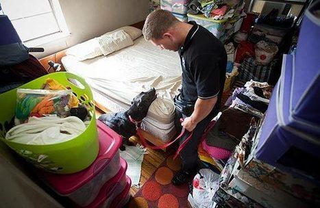 Choose Bed Bugs Exterminators   Pest Control Information   Cara Cepat Hamil   Scoop.it