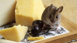 Gene therapy restores sense of smell in mice | Amazing Science | Scoop.it