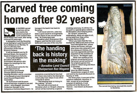 Aboriginal scarred trees - Creative Spirits | Groups associated with places and features, including Aboriginal people | Scoop.it