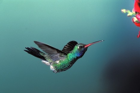 How is Hummingbird affecting search?   SEO   Scoop.it