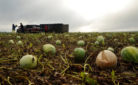 With Too Much Rain in the South, Too Little Produce on the Shelves | Article of the Week | Scoop.it
