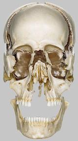 ITCS | Istituto Terapie Cranio Sacrali | Cranio - sacral therapy | Scoop.it