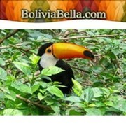 Bolivia Government Type and Structure. Government Branches in Bolivia   Bolivia, Savannah Brackett   Scoop.it