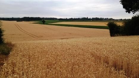 Agriculture française à l'horizon 2050 : Solagro propose un scénario recentré surl'alimentation humaine | Le Fil @gricole | Scoop.it