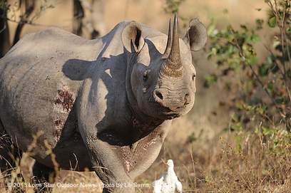 Black rhino hunt to be auctioned at DSC | Trophy Hunting: It's Impact on Wildlife and People | Scoop.it