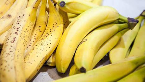 237 kg de cocaïne dans des bananes vendues au supermarché - 7sur7 | Documentation Stupéfiante | Scoop.it