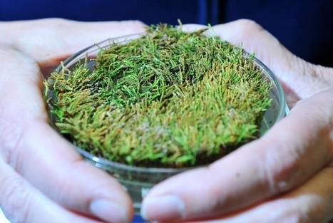 400-year-old frozen moss brought back to life in scientist's lab | shopping news | Scoop.it