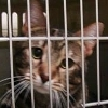 These Are the Faces of Animal Research (Video) | Nature Animals humankind | Scoop.it