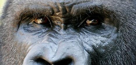 Chasse, pêche, agriculture : les vrais ennemis de la biodiversité ? | Education environnement | Scoop.it