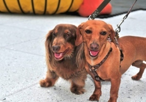Dog concierge services come to swanky buildings   Pet News   Scoop.it