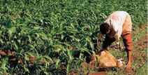 farmlandgrab.org | Activists raise red flag over Tanzania land deal | summer 2012 geo152 | Scoop.it