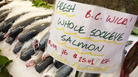 Sockeye salmon collapse due to lack of food, study says | Vertical Farm - Food Factory | Scoop.it