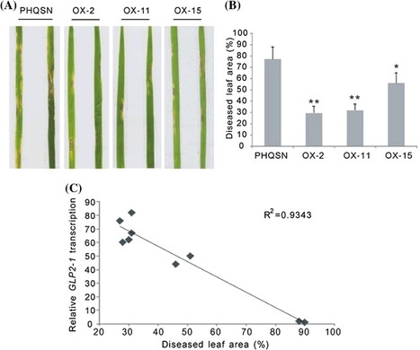 The germin-like protein OsGLP2-1 enhances resistance to fungal blast and bacterial blight in rice | Rice Blast | Scoop.it
