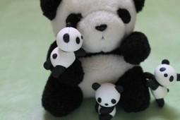 Panda 4.0: le conseguenze per il tuo sito | Web Marketing | Consigli e Soluzioni | Scoop.it
