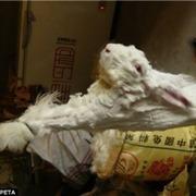 Rabbit Cruelty | Pedegru | Animals Make Life Better | Scoop.it