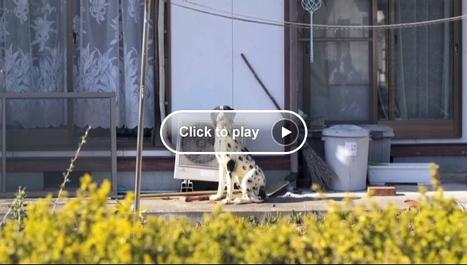 [Vidéo] A l'intérieur de la zone d'évacuation de Fukushima – Anderson Cooper 360 | CNN.com Blogs | Japon : séisme, tsunami & conséquences | Scoop.it