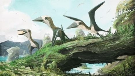 Tiny Pterosaur Claims New Perch on Reptile Family Tree   21st Century Innovative Technologies and Developments as also discoveries, curiosity ( insolite)...   Scoop.it