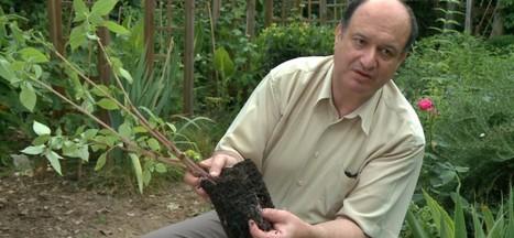 Di Giorno: l'homme qui faisait pousser les plantes... sans eau ! | Ca m'interpelle... | Scoop.it