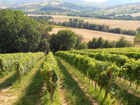 Vinitours: Vinitours Website   Living In Italy   Scoop.it