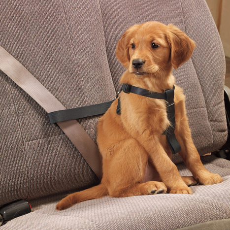 Tips on Keeping Your Dog Safe in the Car | Sweet. Dog. Life. | Dog News | Scoop.it