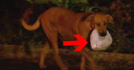 This Poor Dog Traveled 4 Miles To Get THIS Bag. What's Inside Brought Tears To My Eyes. | SocialAction2014 | Scoop.it