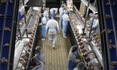 Supermarkets selling chicken that is nearly a fifth water | Business & Management | Scoop.it