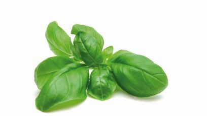 Basil is great for anti-aging | Antiaging Innovation | Scoop.it