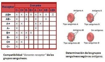 La donación de sangre y de órganos: Grupos sanguíneos y compatibilidades   TRANSPLANTE DE ÓRGANOS, UNA CRÓNICA   Scoop.it