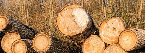 Les exportations de bois français vers la Chine avivent les tensions   Interprofession Forêt Bois des Pyrénées-Atlantiques   Scoop.it