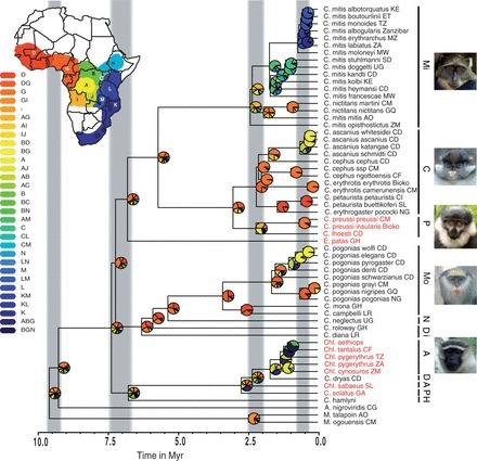 Next-Generation Museomics Disentangles One of the Largest Primate Radiations | Herbaria and research | Scoop.it