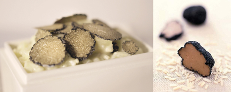 The history of Truffles | Pane, Pizza e Amore | Scoop.it