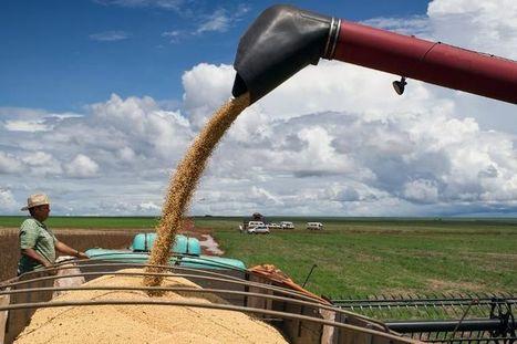 Exploitation industrielle et agriculture paysanne: difficile cohabitation | Questions de développement ... | Scoop.it