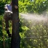 Green Thumb Tree Care