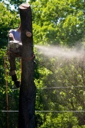 Pro tree service: care & removal in Vacaville - Green Thumb Tree Care | Green Thumb Tree Care | Scoop.it