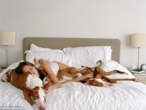 Study shows you get better sleep if your cat or dog is in the bed | animals and prosocial capacities | Scoop.it
