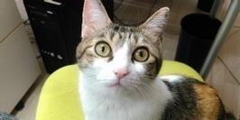 [Idée d'ailleurs] Dans cette société japonaise, amener son chat au bureau rapporte gros | EDUCATION, FORMATION, DEVELOPEMENT, MANAGEMENT | Scoop.it