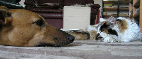 Dogs And Cats Living Together: How To Make It Work | Animal Care & Exotics Species | Scoop.it
