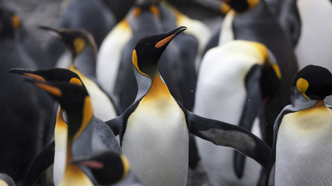 3 practical local link-building ideas that will cure your Penguinitis | Digital Brand Marketing | Scoop.it